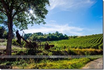 vinyard france small