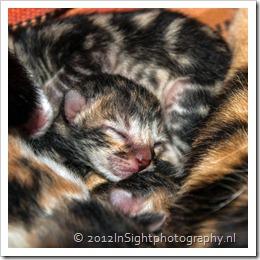 kittens missy-1-2