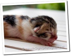 kittens missy-1-3