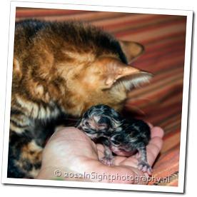 kittens missy-1