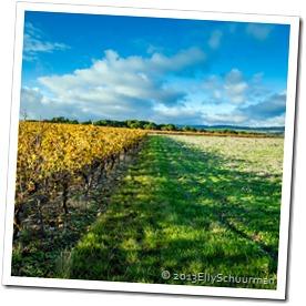vinyard Villardonnel l
